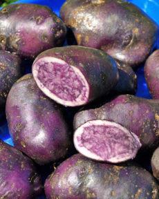 Картофель семенной Французский трюфель