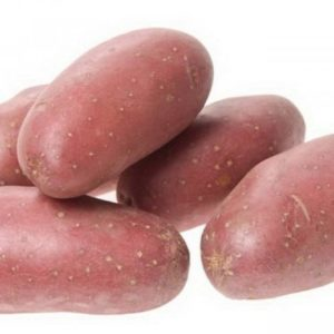 Картофель сорт Рябинушка
