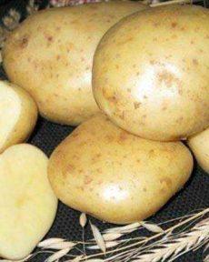 Картофель сорт Сказка