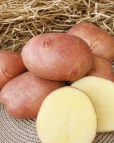Картофель сорт Журавинка