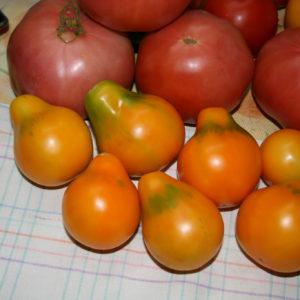 Томат Японский трюфель оранжевый семена