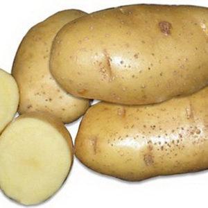 Картофель сорт Янка
