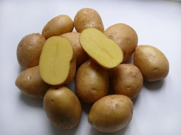 Картофель сорт Коломбо