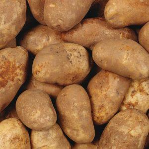Картофель семенной сорт Скарб