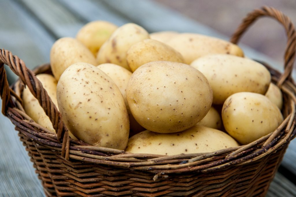 клубни картофеля для посадки в грунт. Купить с доставкой по РФ почтой