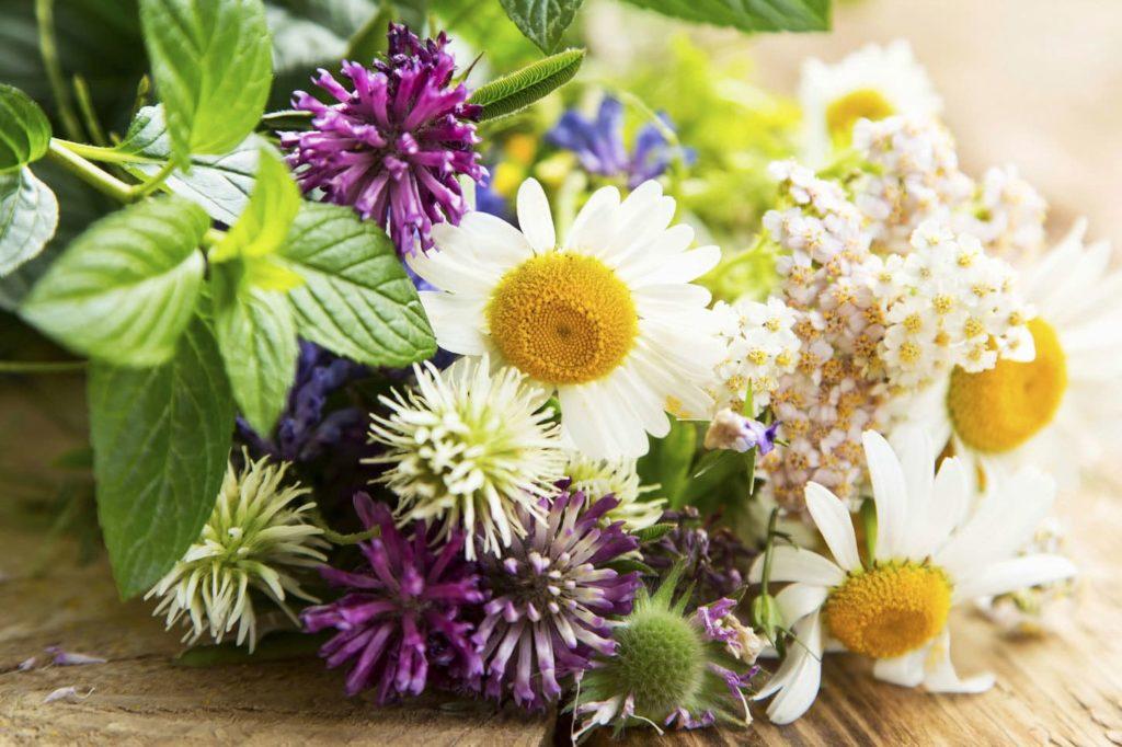 Купить семена полезных и красивых трав с доставкой по РФ почтой.