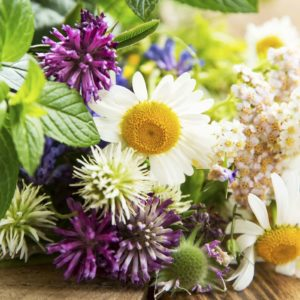 Семена красивых и полезных трав