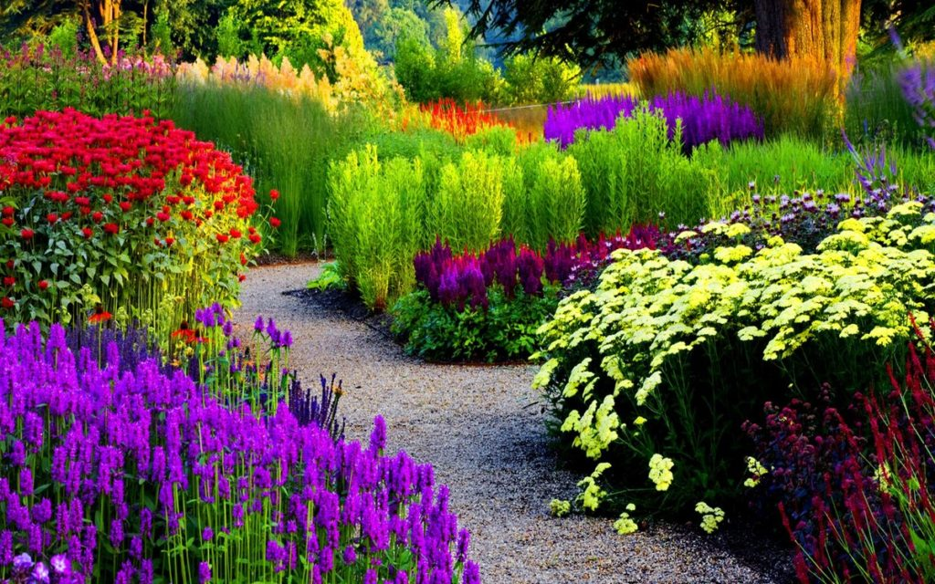 Купить семена садовых цветов с доставкой по РФ почтой