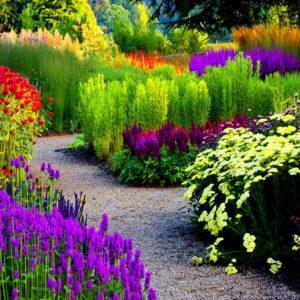 Садовые цветы семена