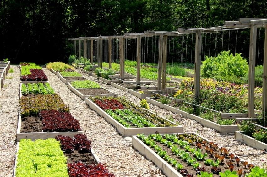 купить семена для огорода с доставкой по РФ почтой.