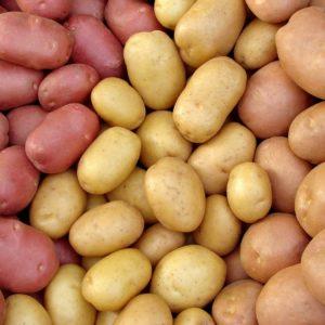 Семенной картофель суперэлита