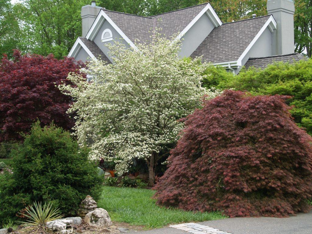 Купить семена декоративных деревьев с доставкой по РФ почтой