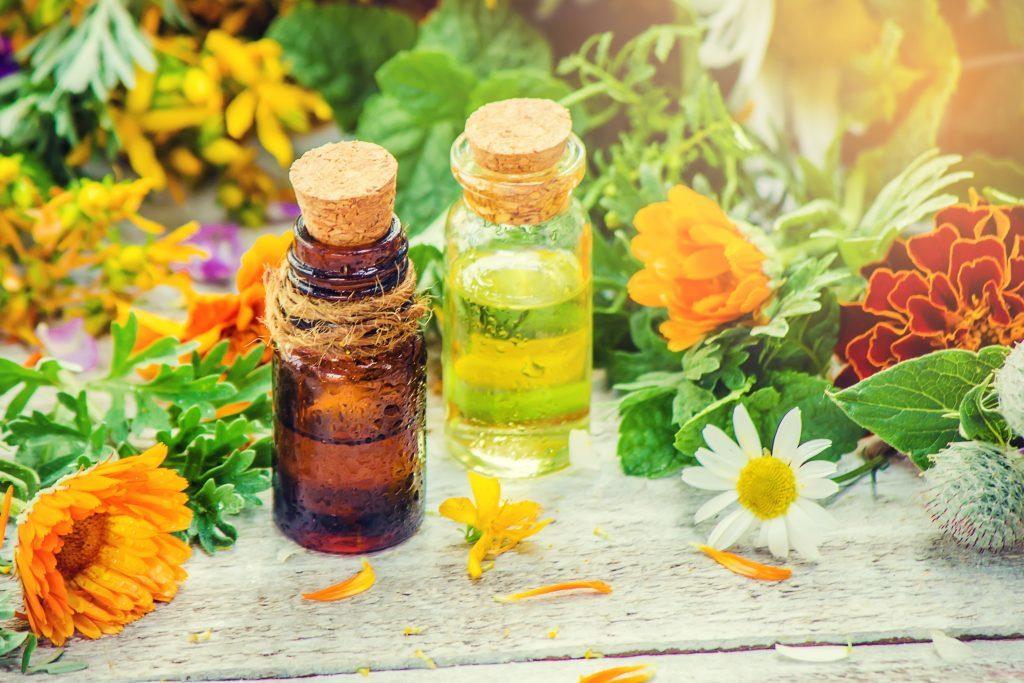 Купить семена лекарственных растений с доставкой по РФ почтой